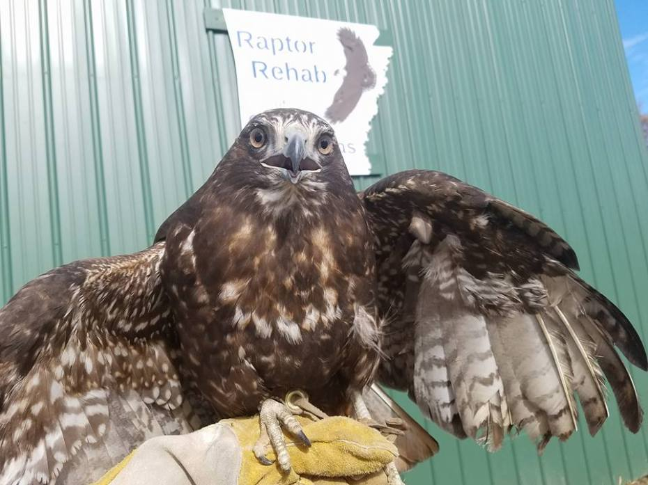 raptor-rehab-large.jpg